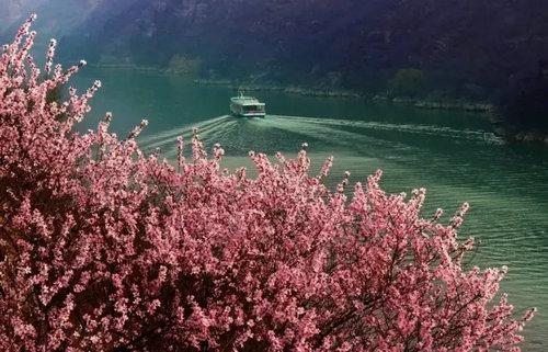 """青天河风景区千山万壑花开成海 美丽的""""桃花湾""""邀你来赏景"""