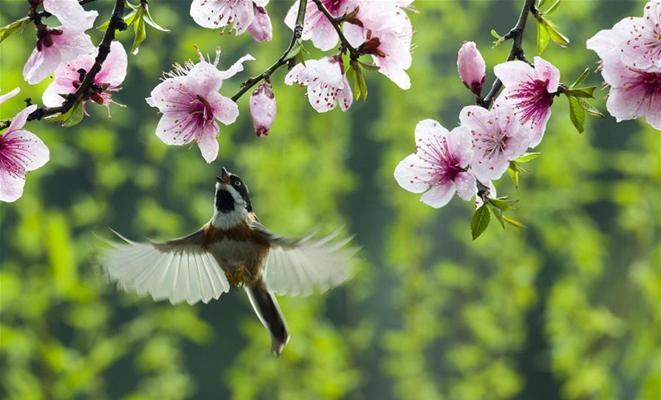 鸟舞花香传春意