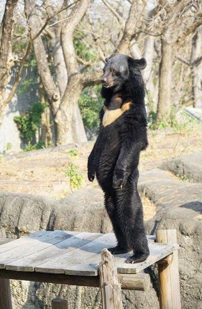 [FUN来了]解气!熊孩子险些推倒孕妇 被网友暴揍