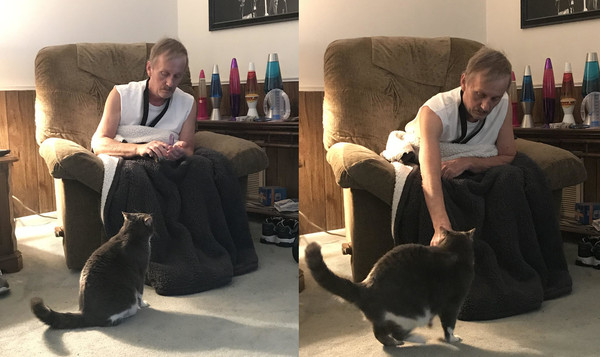 高冷猫咪从不理人 却咆哮着救了铲屎官一命