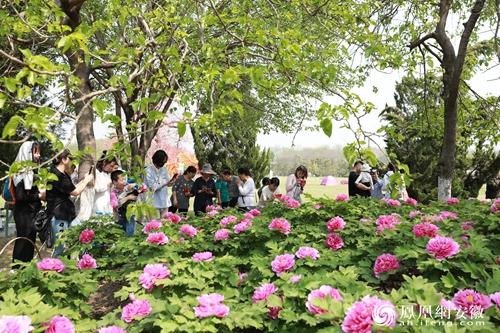 花开新时代牡丹耀庐阳 第十届合肥牡丹节今日开幕