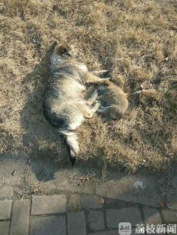 大学保安校园内乱棍打死流浪狗 学生:它很温顺!