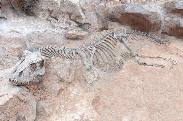 最早的恐龙骨骼化石发现于1677年:最早发现的恐龙骨骼化石是斑龙,