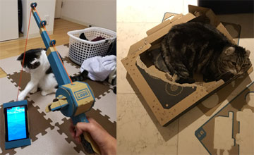 """""""猫奴买了任天堂Labo 不做逗猫棒就成了纸箱窝"""