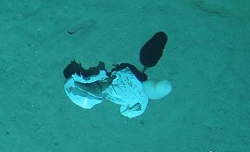 中国潜水器拍摄的南海海底:到处垃圾