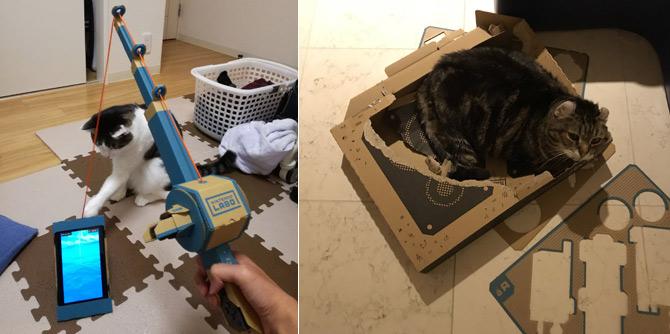 """游戏界称赞的""""纸板"""" 到了猫咪这里就是纸箱窝"""