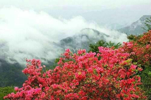 登临汝阳西泰山 眺望九州之新颜、与君慷慨举觞望青天