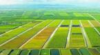 中国首轮农业全过程无人作业试验在兴化启动