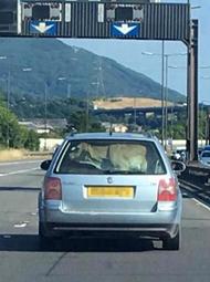 英国轿车后座塞了一头牛 或涉嫌犯罪
