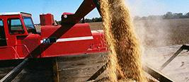 中国拒绝美4428万吨大豆