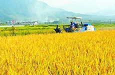 陕西省农业厅要求各地抓好秋粮生产工作