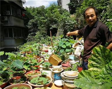 50岁男子在屋后培育130多盆碗莲 梦想建私人荷花园