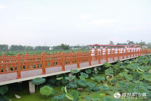 阜阳市阜南地城:美食荷花文化美食节即将开幕首届潮控拍图片