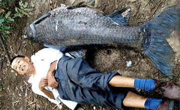 湖北男子钓到巨大青鱼 重102斤