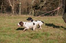 西安:遛狗不拴绳被查3次吊销养犬登记证 5年内禁养