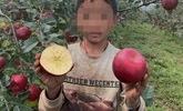 凉山50万斤苹果滞销急哭小女孩?真相:她家根本没种苹果