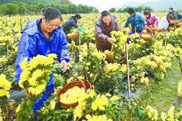 通道侗族自治县冠蔬园发展特色产业增收