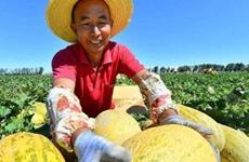 """打造农民""""网红"""" 带动农业产业免费注册送彩金白菜网农民增收"""