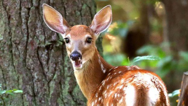 偷猎者捕杀百余头鹿 法官判其在狱中看迪士尼动画