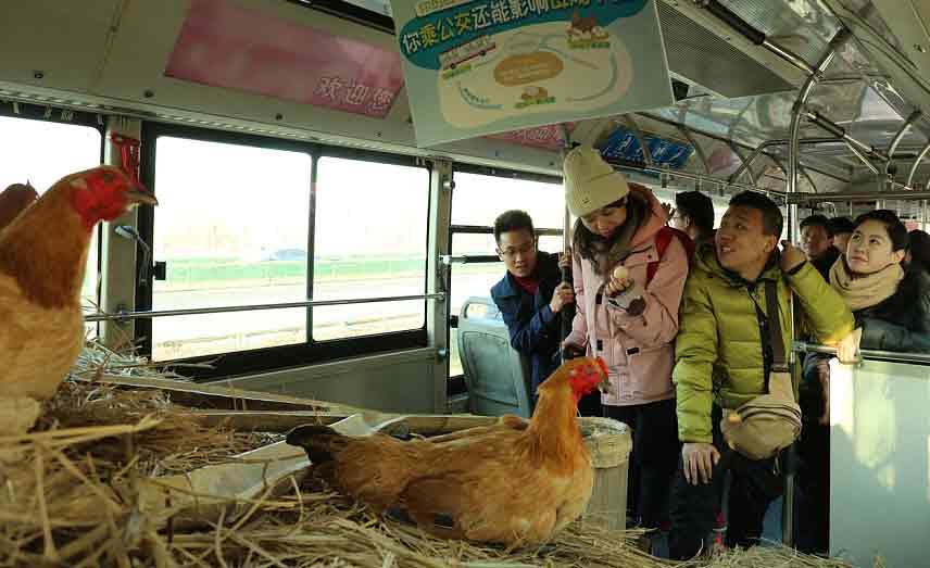 """这辆公交车""""养鸡"""" 乘客还抢着坐!"""
