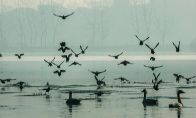 東湖水域:霧里看鳥