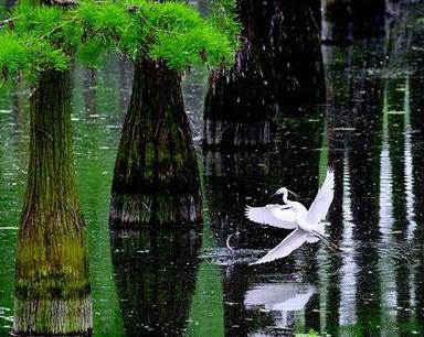 武漢漲渡湖生物凈化改善林下水質