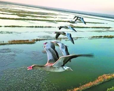 第二屆世界飛行者大會 17只候鳥將與動力傘一起飛翔