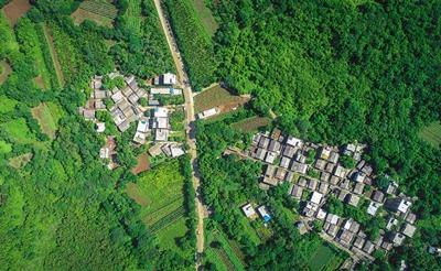 """海口仁里村:鹧鸪茶树添新绿 森林""""搬""""进村庄里"""