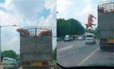 卖猪的路上,猪竟然集体跳车,让人哭笑不得