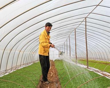 安徽明光:特色产业助农增收