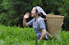 """大巴山北麓孕育艺术瑰宝 汉江上游唱响""""紫阳民歌"""""""