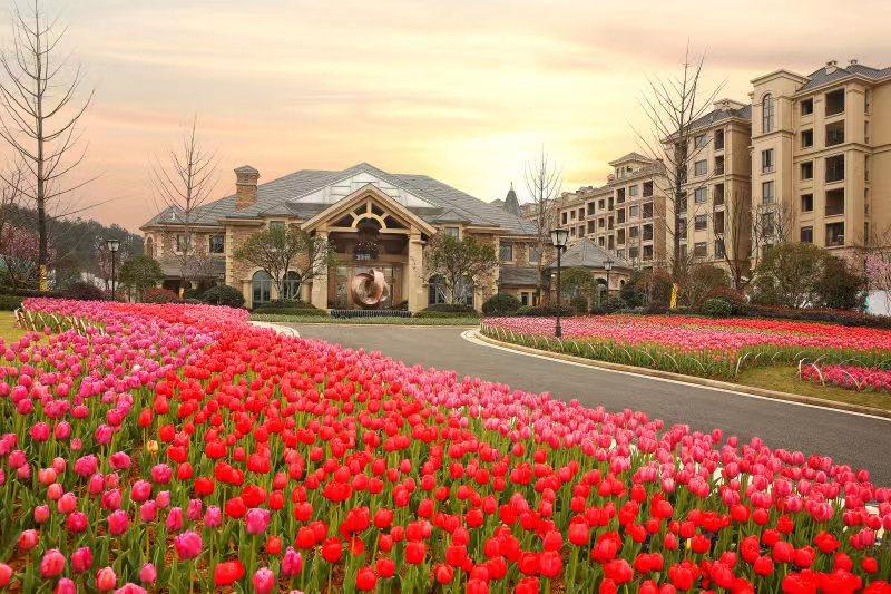 [热点]平阳首届新湖·四季果岭郁金香花展,即日起至3月18日是最佳花期
