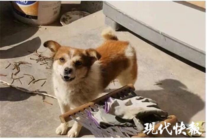【热点】连云港大叔每次入室盗窃都带条小狗:有安全感