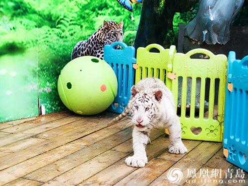 萌兽总动员 青岛森林野生动物世界首届乐学节开幕
