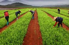 带动作用增强 西安市农业经济运行开局稳中有进