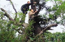 保护秦岭野生动植物资源 西安已完成道路管控全覆盖