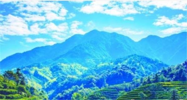 """潮州凤凰古茶树茶园获评""""中国美丽茶园"""" 系广东唯一入选"""