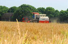 """""""三夏""""期间 陕西已收小麦368万亩占应收面积25%"""