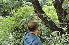 保护秦岭大家园 5只获救助野生鸟回归大自然