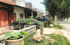"""长安区村民自己动手 设计修建""""赏荷一条街"""""""