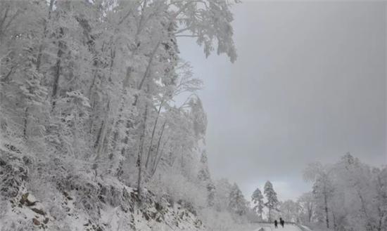 一树红豆韵千重,雪映丹心醉卧丛.