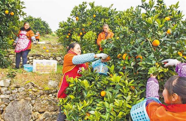 市农业农村委主任路伟:构建现代农业产业体系,让村美民富产业兴