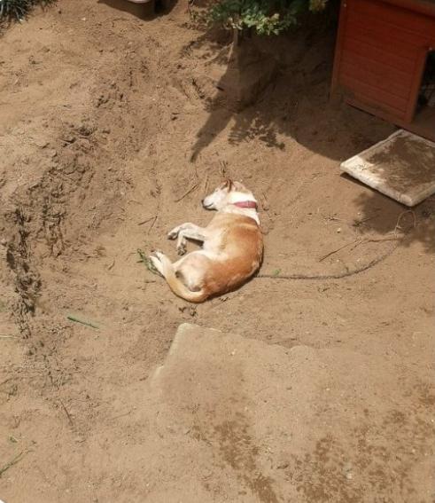 趣图:挖个坑刨点土 狗狗COS七龙珠雅木茶死亡姿势