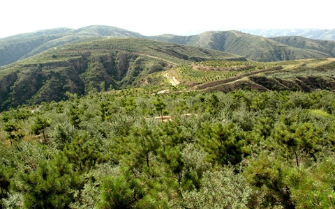 今年上半年榆林市共完成营造林绿化面积近50万亩