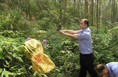 救助野生动物 西安开展秦岭野生动植物保护工作