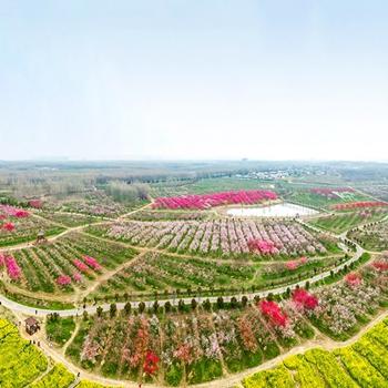 安徽賞花地圖|廬陽三十崗 萬朵桃花開