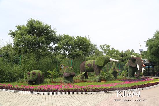 动物造型的花坛