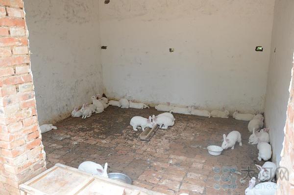 养殖项目首批兔仔