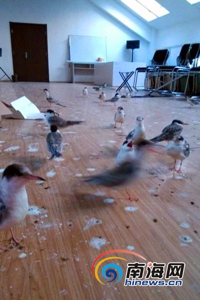 图片由青岛野生动物救助协会提供