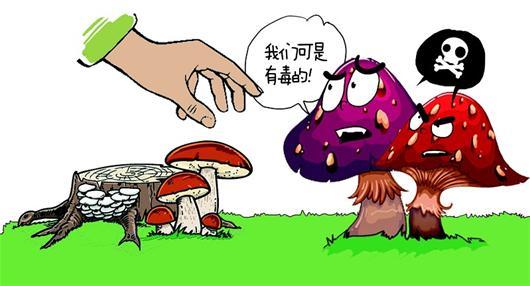 蘑菇结构示意图科学